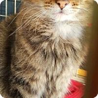 Adopt A Pet :: Kenshaw - Lyons, IL