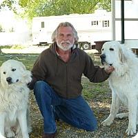 Adopt A Pet :: GANNON & GABLE - Granite Bay, CA