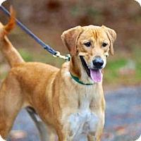 Adopt A Pet :: ZEKE - Wainscott, NY