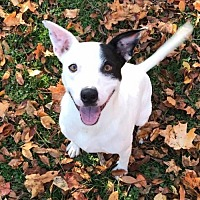 Adopt A Pet :: Petey - Indianapolis, IN
