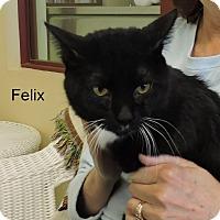 Adopt A Pet :: Felix - Slidell, LA
