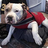 Adopt A Pet :: Money - Santa Monica, CA