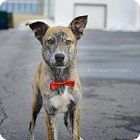 Adopt A Pet :: Kevyn - Salt Lake City, UT
