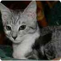 Adopt A Pet :: Picasso (& Renoir) - Arlington, VA