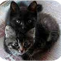Adopt A Pet :: Jazzy and Lola - Hamilton, ON