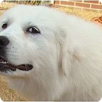 Adopt A Pet :: Ella -Adopted - Oklahoma City, OK