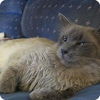 Adopt A Pet :: Lila - Brea, CA