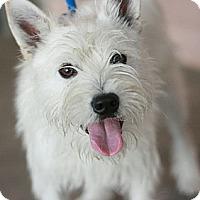 Adopt A Pet :: Jax - Canoga Park, CA