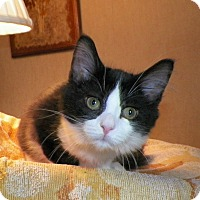 Adopt A Pet :: Lilly - Dover, OH