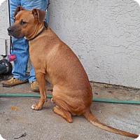 Adopt A Pet :: Eduardo, Ed, Edwards - Woodland, CA