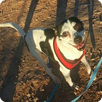 Adopt A Pet :: Panda - Alamogordo, NM