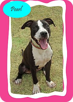 Hound (Unknown Type)/Terrier (Unknown Type, Medium) Mix Dog for adoption in Hillsboro, Texas - Pearl