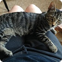 Adopt A Pet :: GABRIEL - Ridgewood, NY