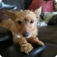 Adopt A Pet :: Murphy - Ocean Ridge, FL