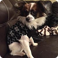 Adopt A Pet :: Tad - Plainfield, IL