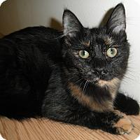 Adopt A Pet :: Yenta - Milwaukee, WI