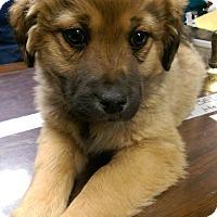 Adopt A Pet :: Alexis - Ogden, UT