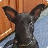 Adopt A Pet :: Ebony AD 03-12-16 - Preston, CT