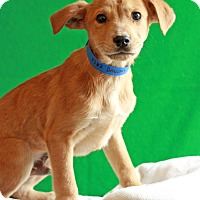 Adopt A Pet :: Deacon - Waldorf, MD