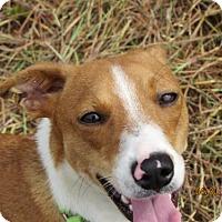 Adopt A Pet :: camille - Bradenton, FL