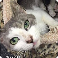 Adopt A Pet :: Tizzy - West Orange, NJ