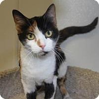 Adopt A Pet :: Bella - Greensboro, NC
