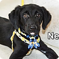Adopt A Pet :: Nevin Chen - Seattle, WA