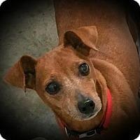 Adopt A Pet :: Rocky - Paducah, KY