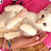 Adopt A Pet :: Nipper - Rocklin, CA