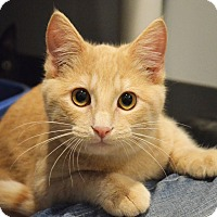Adopt A Pet :: August - Lincoln, NE