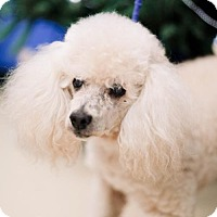 Adopt A Pet :: Keller - In Foster - Chino Hills, CA
