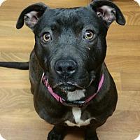 Adopt A Pet :: Sophia- SPONSORED - Lisbon, OH