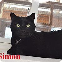 Adopt A Pet :: Simon - Fryeburg, ME