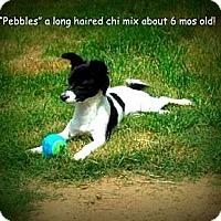 Adopt A Pet :: Pebbles - Gadsden, AL
