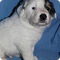 Adopt A Pet :: Huck - Stilwell, OK