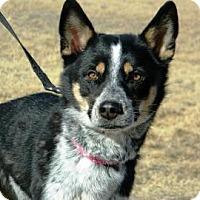 Adopt A Pet :: Hanna - Cheyenne, WY