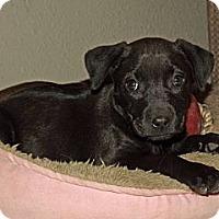 Adopt A Pet :: Gemma - Phoenix, AZ