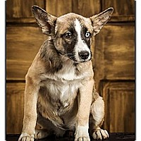 Adopt A Pet :: Veronica - Owensboro, KY