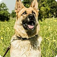 Adopt A Pet :: Jaeger - Jennings, OK