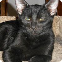 Adopt A Pet :: Dave - North Highlands, CA