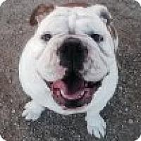 Adopt A Pet :: Bonnie - Atascadero, CA