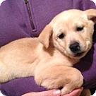 Adopt A Pet :: Cybil