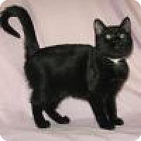 Adopt A Pet :: Morganna - Powell, OH