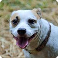 Adopt A Pet :: Lucy Van Pelt - Jersey City, NJ