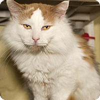 Adopt A Pet :: Minoru - Grand Ledge, MI