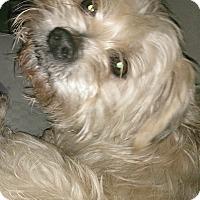 Adopt A Pet :: Trooper-ADOPTION PENDING - Boulder, CO
