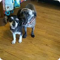 Adopt A Pet :: Asha - Las Vegas, NV