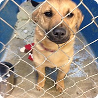 Adopt A Pet :: Holly - Pompton Lakes, NJ