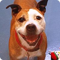 Adopt A Pet :: Gianna - Gettysburg, PA