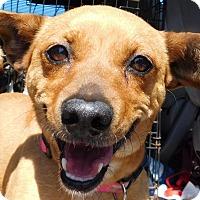 Adopt A Pet :: Alice - MINNEAPOLIS, KS
